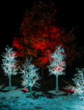 Interesting Holiday Lighting by Pistos, holidays->christmas gallery