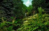 Jesmond Dene 4 by biffobear, photography->waterfalls gallery