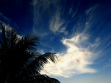 Blue Skied Palm Tree by clarkephotography, Photography->Skies gallery