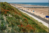 Poppies In The Sand Dunes by corngrowth, photography->shorelines gallery
