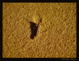 Shadow Play by BluePhoenix, photography->insects/spiders gallery