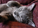 Catnap by Akeraios, photography->pets gallery
