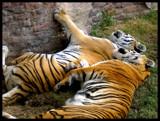 A Decent Pillow by XxTwilightxX, Photography->Animals gallery