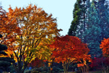 Autumn Glory by Ramad, photography->landscape gallery