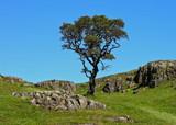 One tree hill by biffobear, photography->landscape gallery