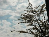 Plant and Sky by jimschueler, photography->nature gallery