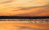 Geese, Geese, And More Geese! by Jimbobedsel, photography->sunset/rise gallery
