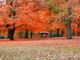 Chinese Pavillion in Autumn by jojomercury, Photography->Landscape gallery