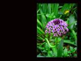 purple flower by kimcande, Photography->Landscape gallery