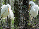 Nesting  14 by 100k_xle, photography->birds gallery