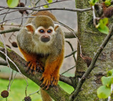 Cheeky by biffobear, photography->animals gallery