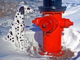 So Many Fireplugs, So Little Time by PatAndre, Photography->Pets gallery