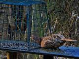 Stuck by biffobear, photography->birds gallery