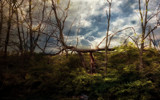 Downton Abtree by casechaser, photography->manipulation gallery