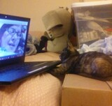 Kitty Skype by GomekFlorida, photography->animals gallery
