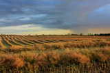Harvest by meandian, Photography->Landscape gallery