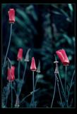 Secret Garden by jesouris, Photography->Nature gallery