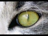 Cat's Eye Revised by June, Photography->Pets gallery