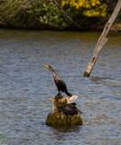 Watching Cormorants by Pistos, photography->birds gallery