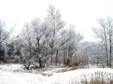 Winter Wonder Land by wheedance, Photography->Landscape gallery