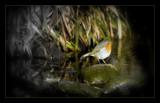 Rockin Robin by JQ, Photography->Birds gallery