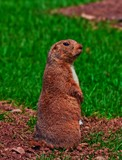 Oi ! by biffobear, photography->animals gallery