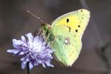 cds 78 by ferit, photography->butterflies gallery