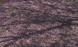 Ground Cover by jerseygurl, photography->landscape gallery