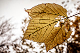 Leaf by Eubeen, photography->nature gallery