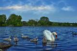 Family Visit by biffobear, Photography->Birds gallery