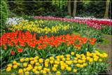 Keukenhof 13 by corngrowth, photography->flowers gallery