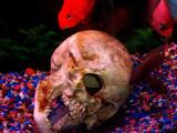 skulls by msjenham, Photography->Underwater gallery
