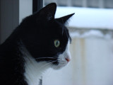 Watching the birds... by Plinius, photography->pets gallery