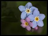 Spring blossom II by ekowalska, Photography->Flowers gallery