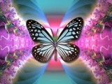 Butterfly Blue by nmsmith, Illustrations->Digital gallery