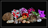 Foofies, Rocks and Stones by Jimbobedsel, photography->flowers gallery