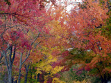 Fall colors by ted3020, photography->nature gallery