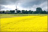 Colza Field by corngrowth, photography->landscape gallery