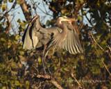 Looking Sharp by garrettparkinson, photography->birds gallery