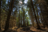 Debdon Forest by slybri, photography->landscape gallery