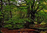 Picnic place by biffobear, photography->landscape gallery