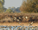 San Joaquin Valley Fall by garrettparkinson, photography->birds gallery