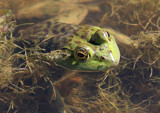 Look'in At You by rahto, Photography->Reptiles/amphibians gallery