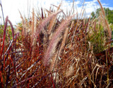 Autumn Grasses by trixxie17, photography->nature gallery