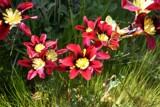 Choose me by soosool, Photography->Flowers gallery