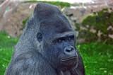 Bukavu by biffobear, Photography->Animals gallery