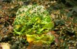 Kale_Garden Planting. by tigger3, photography->gardens gallery