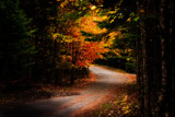 Road in Autumn by Eubeen, photography->landscape gallery