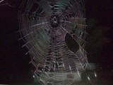 Spider's web at night. by sahadk, Photography->Textures gallery