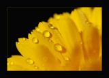 Hello Yellow by dmk, Photography->Macro gallery